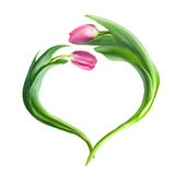 Hart van purpere tulpen royalty-vrije stock afbeelding