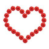 Hart van rode gerberabloemen die op wit worden geïsoleerd Stock Afbeeldingen
