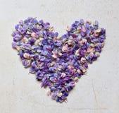Hart van roze en purpere lupinebloemen Verjaardag, Moeder` s dag, de Dag van Valentine ` s, 8 Maart, Huwelijkskaart of uitnodigin stock afbeelding