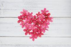 Hart van roze en rode bloemen wordt gemaakt die Royalty-vrije Stock Fotografie