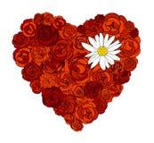 Hart van rozen en madeliefje Royalty-vrije Stock Afbeeldingen
