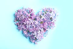 Hart van tot bloei komende sering op kleurenachtergrond die wordt gemaakt enkel Geregend royalty-vrije stock foto's