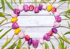 Hart van verse tulpen royalty-vrije stock afbeeldingen