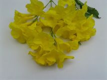 Hart wat betreft Mooie gele bloem royalty-vrije stock foto