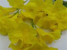 Hart wat betreft Mooie gele bloem royalty-vrije stock fotografie