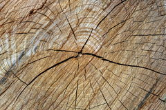 Harte gebrochene Linien Beschaffenheit auf Holz Lizenzfreie Stockbilder