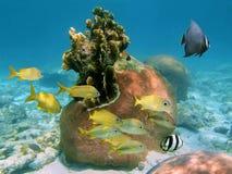 Harte Koralle mit Fischen Stockfotos