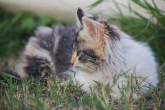 Hartelijk kattenprofiel royalty-vrije stock afbeelding