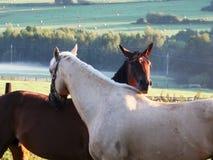Hartelijke paarden royalty-vrije stock afbeelding