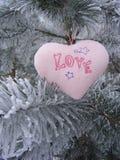 Hartliefde op de tak van pijnboom Stock Afbeelding