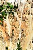 Hartnäckigkeit von Bäumen Lizenzfreie Stockfotografie