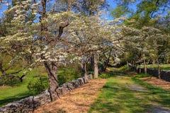 Hartriegel-Bäume und Trockenmauern Stockfotografie