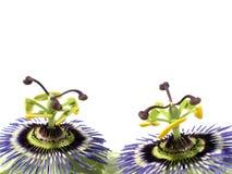 Hartstochtelijke bloemen royalty-vrije stock foto