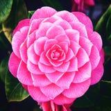 Hartstochtelijke roze zonlichtdroom royalty-vrije stock fotografie