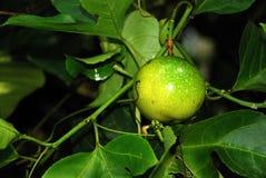 hartstochts fruit Royalty-vrije Stock Foto