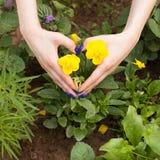 Hartvorm met hand op gele bloemen Stock Foto's