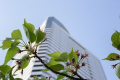 Harumi triton square in spring. Kachidoki, Tokyo, Japan, 04/06/2019 , View of Harumi Triton Square from the riverside, and cherry tree branch with flowers royalty free stock image