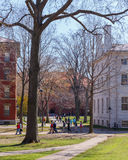 Harvard Campus Life Stock Images