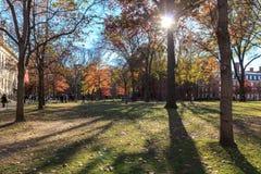 Harvard gård Royaltyfri Foto