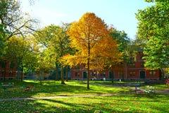 Harvard gård på Cambridge Fotografering för Bildbyråer