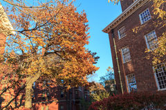 Harvard nedgångDorms Arkivbild