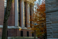 Harvard University Library Royalty Free Stock Images