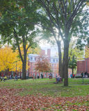 Harvard Yard Fall Day Stock Photos