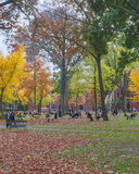 Harvard Yard Fall Day Stock Photo