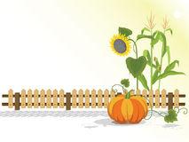 Harvest. Agricultural plants against the bright background. Pumpkin, sunflower and corn Stock Photos