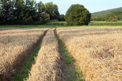 Harvest. Field with trees in the background Stock Images