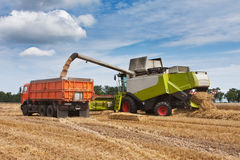 Harvest. Loading of wheat to the truck Stock Image