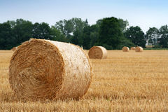 After harvest Royalty Free Stock Image