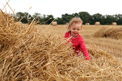 After harvest stock photography