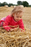 After harvest Stock Image