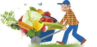 Harvest. Vector cartoon of a happy farmer conveying a full wheelbarrow of vegetables Royalty Free Stock Image