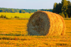 Harvest Royalty Free Stock Photos