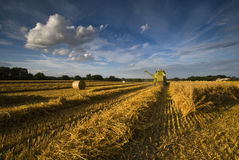 Harvest. Ing the wheat on a field in Norfolk in July Stock Photography