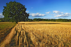 On the harvest Royalty Free Stock Photography