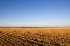 After the Harvest. A harvested field on the Western Kansas plains glows golden in early morning sunlight Royalty Free Stock Photos