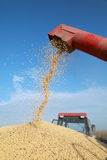 Harvest. Grain auger of combine pouring soy bean into tractor trailer Stock Image