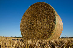 Harvest. Bale of straw on the field Royalty Free Stock Photo