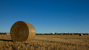 Harvest. Bale of straw on the field Stock Photo