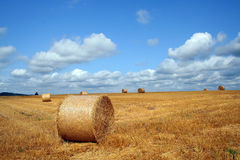 Harvest Stock Photos