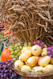 Harvest. Yellow pears, green und violet grapes, pumpkin and wheat Royalty Free Stock Photo