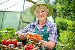Harvest. Senior woman  with a basket of harvested vegetables  against a hothouse Royalty Free Stock Image