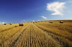 Harvest royalty free stock photos