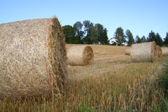 Harvest. Landscape Stock Photos