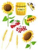 Harvest. Sunflower,wheat, cranberry, honey, bee  isolated on white background Stock Photography