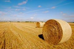 Harvest Stock Photography