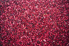 Cranberry Harvest Fruit Food Floats Water Surface Royalty Free Stock Images